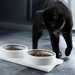 Полезные советы по выбору корма для кошек