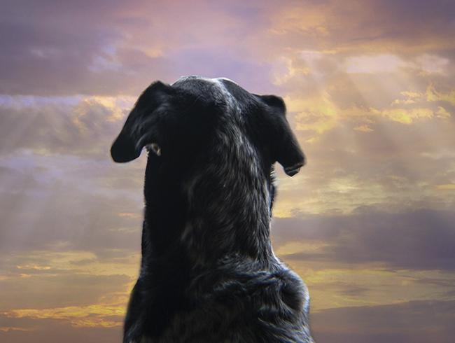 Собака смотрит в небо