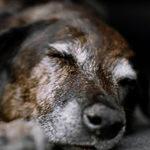 Как пережить смерть любимой собаки?