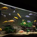 Советы и рекомендации начинающим аквариумистам