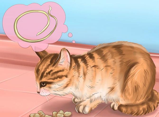 Кошка с аскаридозом