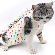 Важные советы по уходу за кошкой после стерилизации