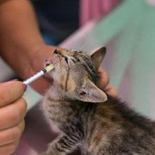 Важные советы по лечению аскаридоза у кошек