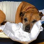 Важные советы по уходу за собакой после стерилизации