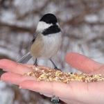 Как правильно кормить птиц? Советы и рекомендации